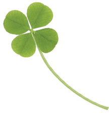 This is a photo of a four leaf clover.