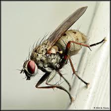 fly22