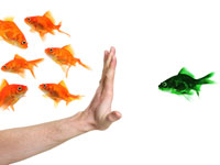 This is a photo of a hand excluding a green fish from a group of orange fish.