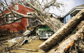 An uprooted tree sits atop a car and house in Ward 9, New Orleans.