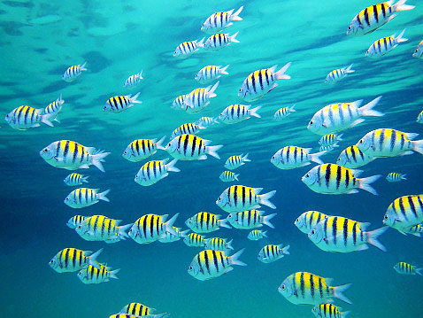 This is an image of a school of fish.