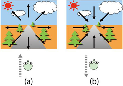 (a) Radial expansion flow with forward movement; (b) Contraction flow with backward movement.