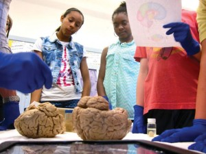 The NW Noggin program introduces youth to the structure and function of their own developing brains.