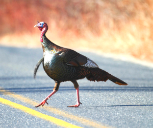 PAFF_112514_ThanksgivingDriving_newsfeature