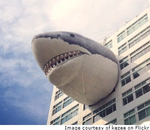 PAFF_071615_SharksCarAccidents_newsfeature