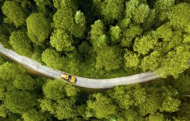 Yellow car driving on a road through a forest