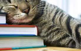 Tabby cat sleeping on multi colored books