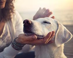 owner caressing gently her dog