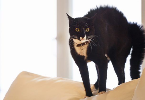 Shot of a black cat standing on a sofa