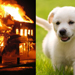 paff_0801_puppyfire-visualimages_thumb