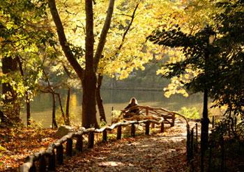 park-lake-use