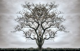 A tree without leaves stands against a stark background.