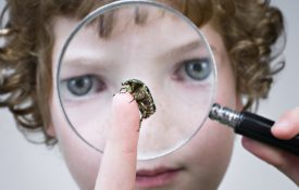 Young Boy Examining A Beetle Through Magnifying Glass