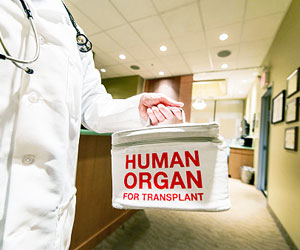 This is a photo of a doctor holding an organ transplant bag.