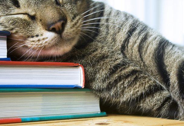 Tabby cat sleeping on multi colored books