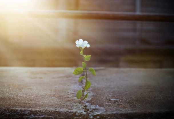 This is a photo of a white flower growing out of a crack in asphalt