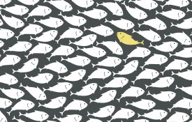 One fish swimming against the stream in a school of fish